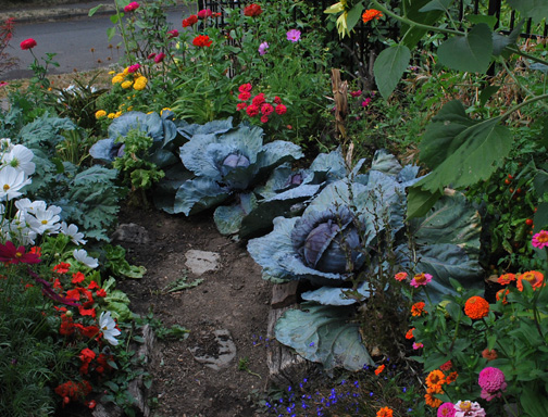 cabbages resized