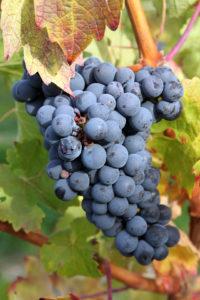 grapes bor wiki