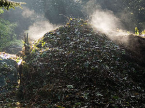Compost_Heap bor wiki cropped